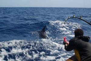 Blue Marlin 1 (1) (1) (1) (1) (1)
